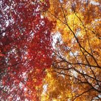 아름다운 가을날 단풍